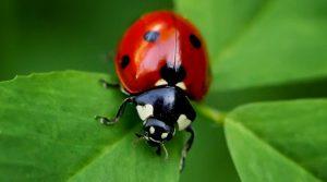 locandina di A Città della Scienza a Napoli apre la Casa degli Insetti con tante specie da formiche a scorpioni