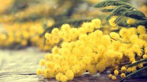 Mimose женский день