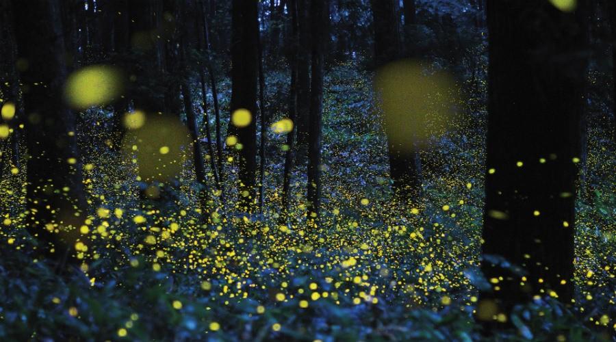affiche de La magie des lucioles au lac Averno avec apéritif et nourriture du jardin