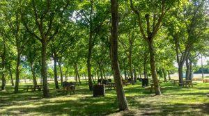 متنزه