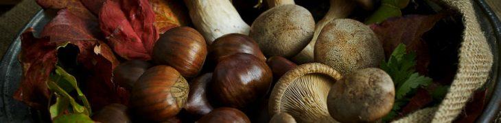 Праздник трюфельного каштана и белых грибов