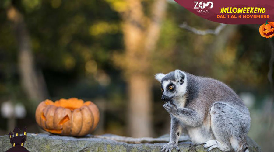 Halloween Napoli.Halloween At The Naples Zoo 2018 The Program Napolike It