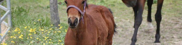 giornata del cavallo giugliano