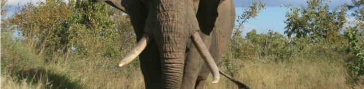 Elefante Zoo di Napoli