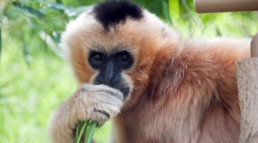 Gibboni zoo di Napoli