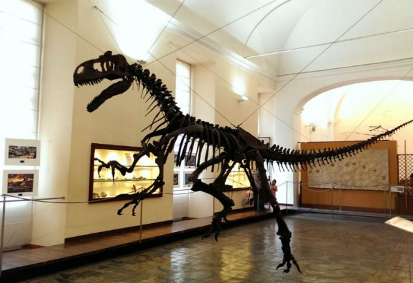 Museum of Paleontology Naples