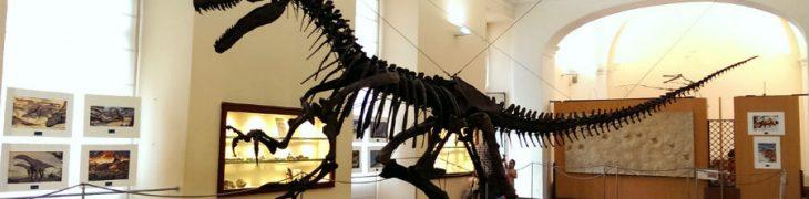 古生物博物馆那不勒斯