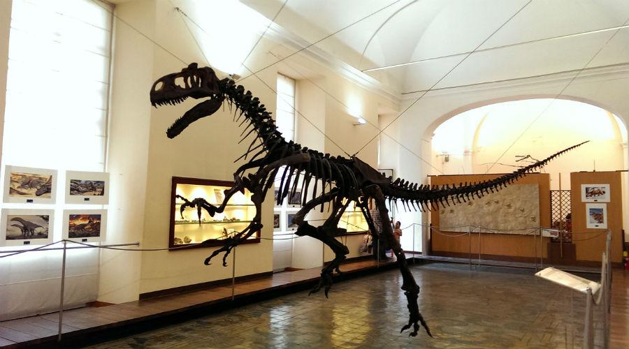 古生物学博物館ナポリ