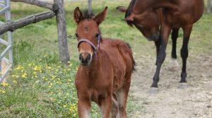 locandina di Giornata del Cavallo a Giugliano: una mattinata meravigliosa per i più piccoli