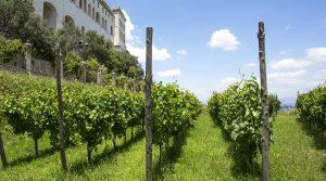 Афиша тура на виноградник Сан-Мартино в Неаполе с аперитивом