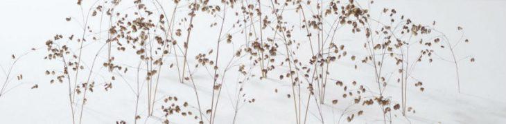 Christiane Lohr Ausstellung