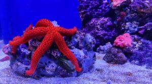 Aquarium of Naples